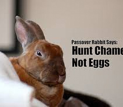 Passover Rabbit Says . . .